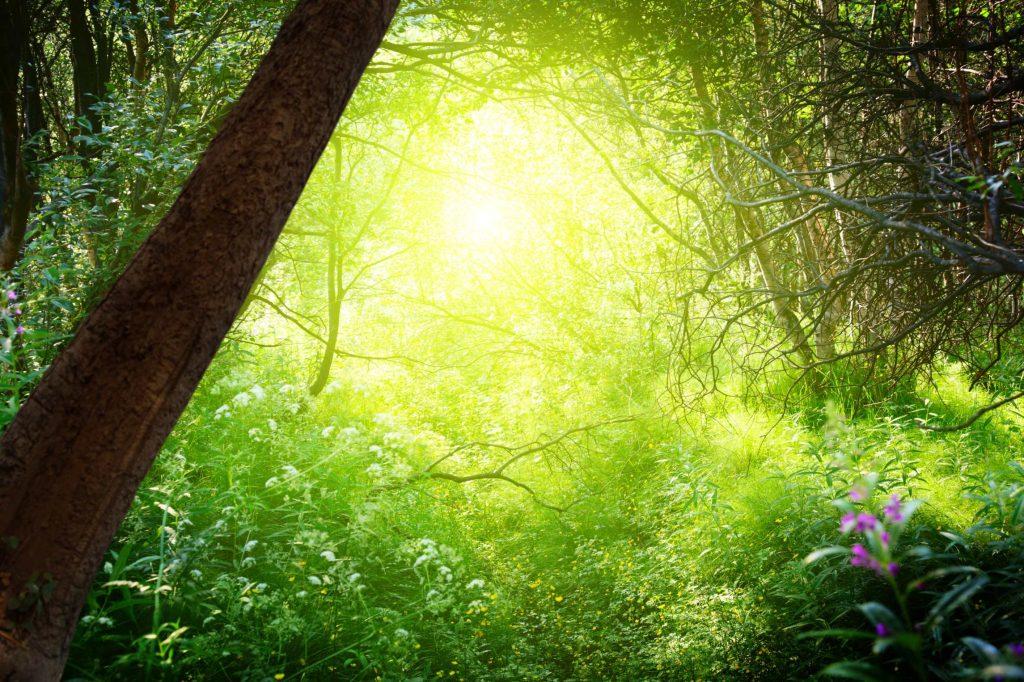Photo of light streaming through trees